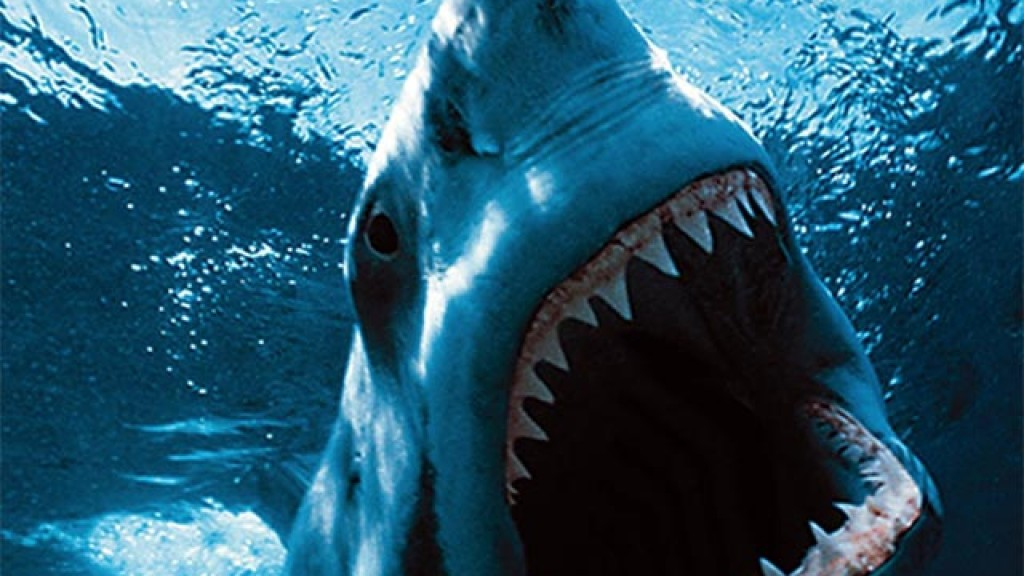 great-white-shark-wallpaper---2560x1440